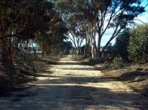 adams road01911