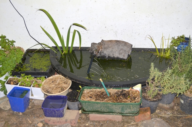 Home for Orphaned Polliwogs