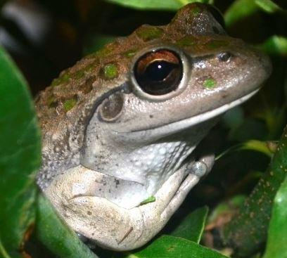 frogprincess