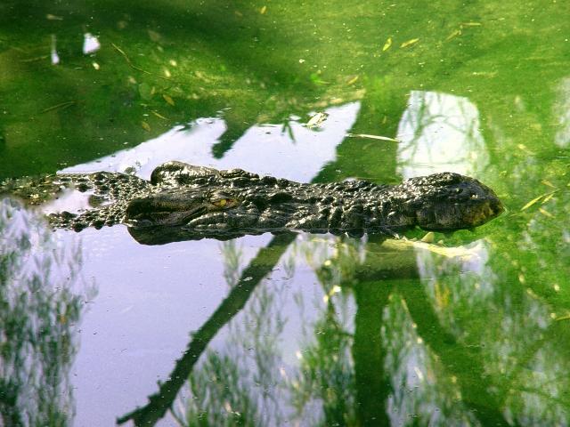 croc08097aw