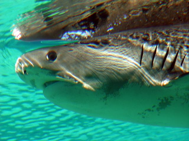 shark08213