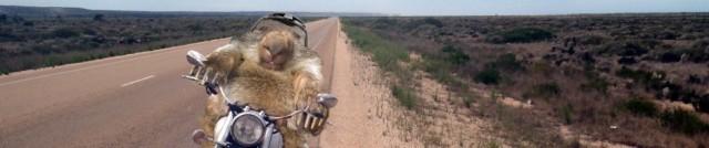Wombat on Bike.