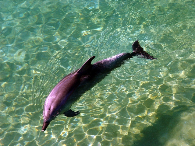 Dolphin08165